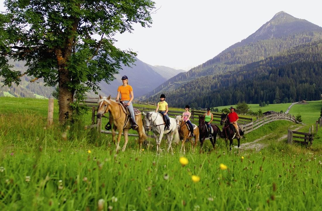 pferde über den rücken reiten